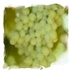 Druivenpit olie Druiv3 1000 ml