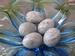 Prachtige ei te gebruiken als afsluiting 72 kleine ei